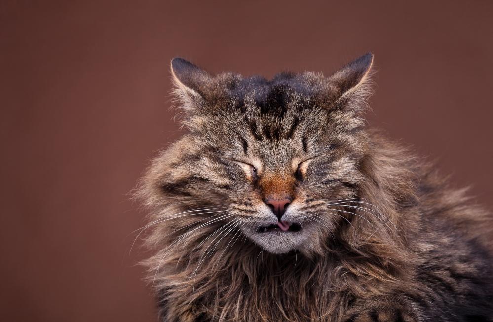 Кот кашляет и хрипит