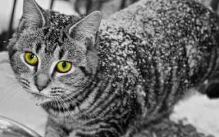 Простуда у кошек лечение в домашних условиях