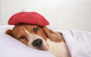 Простуда у собак
