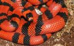 Змея заболевшая пневмонией